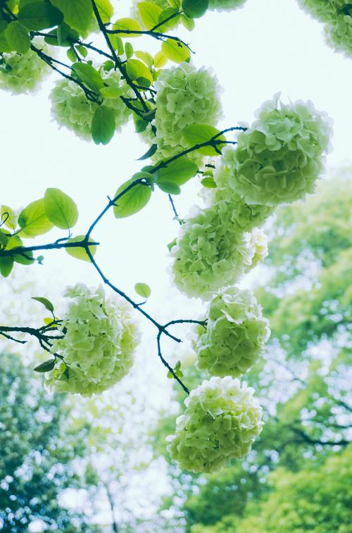 春天花会开,小清新图片