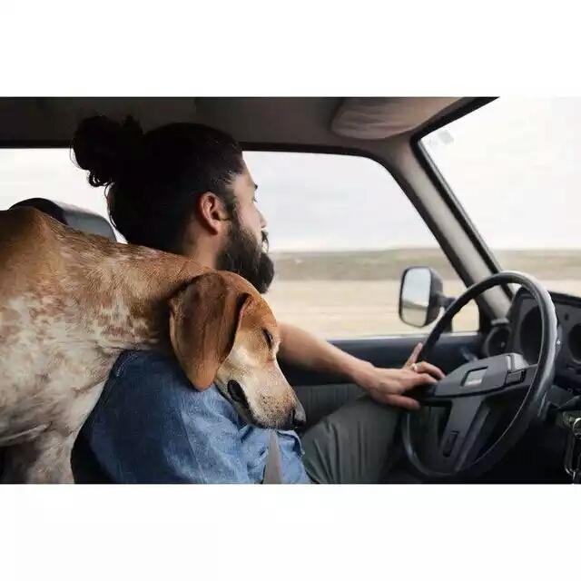 狗狗和老爸们的故事-温暖图片