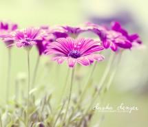 唯美花卉图片