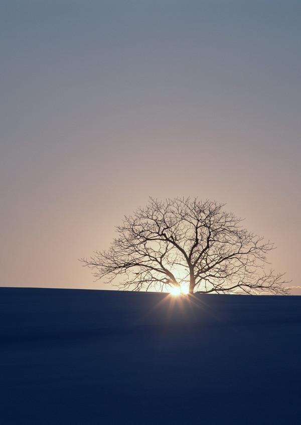 夕阳伤感黄昏唯美图_凄美图片 夕阳无限好 只是近黄昏_唯美图片