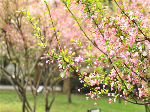 桃花依旧笑春风
