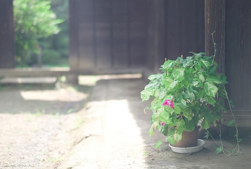 静若处子 安静的植物