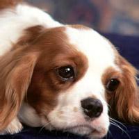 最萌最可爱的动物头像