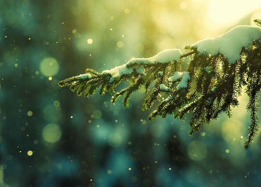 为你展现唯美雪景风采