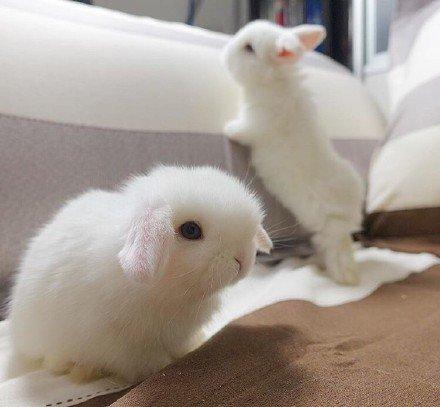 萌化了的小白兔