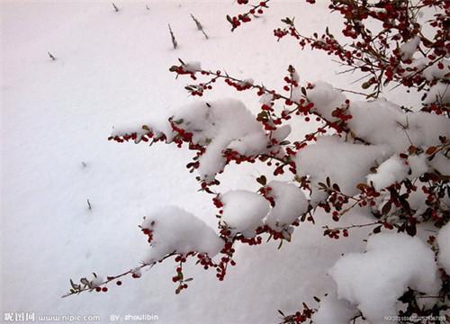 雪的美丽 来年在欣赏