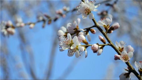 阳光明媚的春天