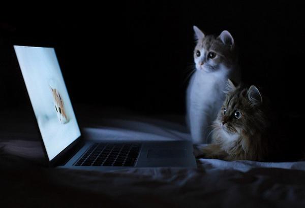 治愈系猫咪的世界