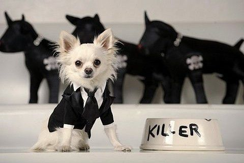 可爱狗狗图片 萌化你的内心