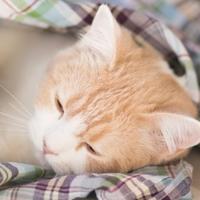 可爱猫星人头像