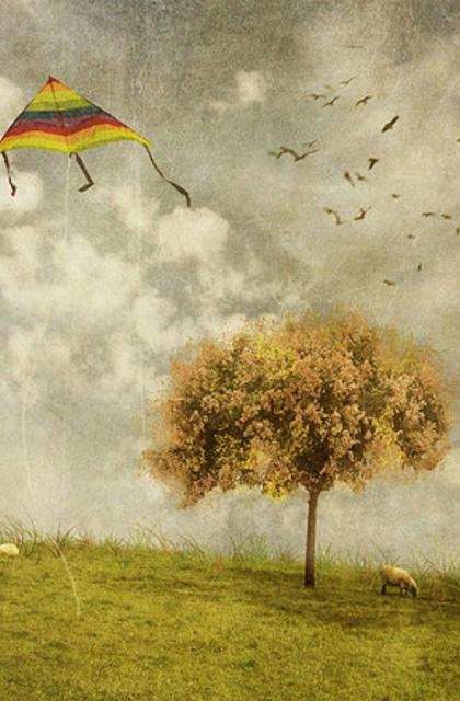风说 我带你飞翔 壁纸