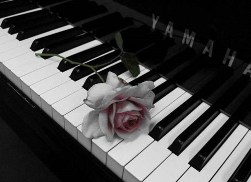 黑白的琴键上跳动的是泛黄的记忆
