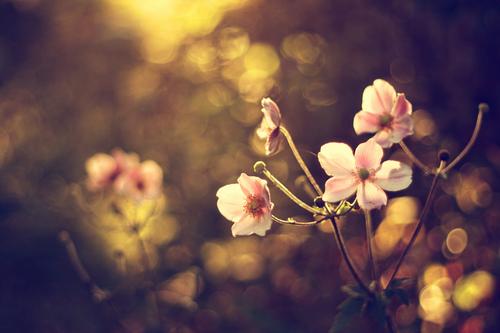 愿你像花一样的美丽