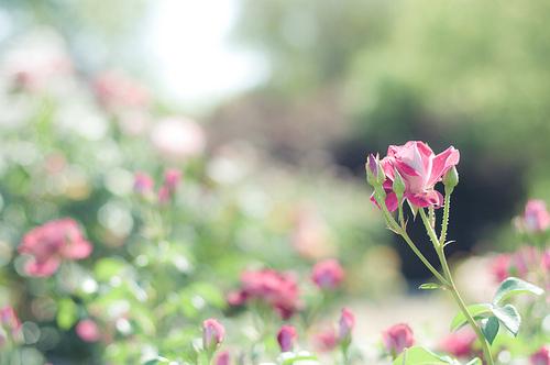 非常清新唯美的花朵